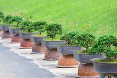 bonsai trees garden - stock photo
