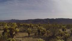 Pan-Tilt Cholla Cactus To Sun-Sky- Joshua Tree National Park Stock Footage