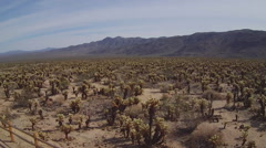 Ultra Wide Cholla Gardens And Mountains- Joshua Tree National Park Stock Footage