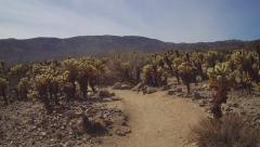 Viewpoint Walking Trail In Cholla Cactus Garden- JTNP - stock footage