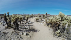 Hiking Trail Thru Cholla Cactus Grove- Joshua Tree National Park Stock Footage