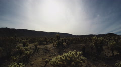 Tilt Down From Sky To Cholla Cactus Grove- Joshua Tree National Park - stock footage