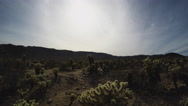 Stock Video Footage of Tilt Down From Sky To Cholla Cactus Grove- Joshua Tree National Park