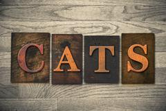Cats Wooden Letterpress Theme - stock photo