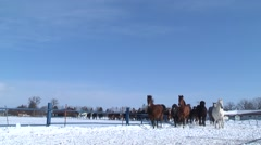 Horses trotting on snow, Hokkaido, Japan Stock Footage