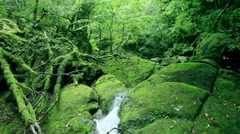 Stock Video Footage of Shiratani Unsuikyo Ravine, Kagoshima Prefecture, Japan