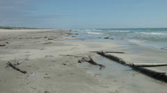 Padre Island National Seashore, with birds and driftwood Stock Footage