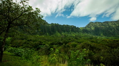 KaneOhe Forest Reserve pan right time lapse Stock Footage