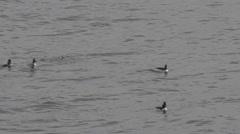 Marine birds Stock Footage