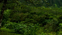 KaneOhe Forest Reserve pan and zoom out Stock Footage