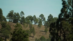 Clouds going through meadow of Canary pines Stock Footage