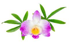 composition of dendrobium flower and leaves passionflower on white background - stock photo