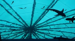 Silhouette of the shark tank Stock Footage