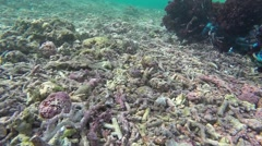 Damaged and dead corals on tropical coral reef Stock Footage