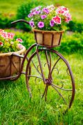 Decorative Vintage Model Old Bicycle Equipped Basket Flowers Gar Stock Photos