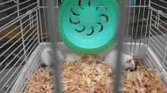 Stock Video Footage of The mice were caged sold as pets