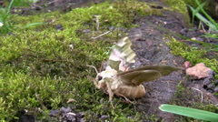 Moth stretching its wings in spring Stock Footage