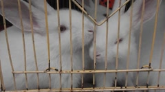 Little white rabbit in a cage. Stock Footage