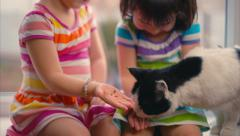 Two Young Girls Feeding Cat Stock Footage