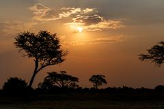 African sunset with tree in front - stock photo