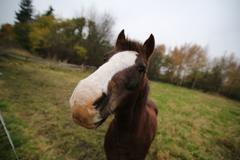 Wide-Angle Macro Of Horse - stock photo