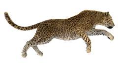Leopard Stock Illustration