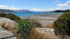 New Zealand Lake Tekapo blades of tussock grass between boulders Stock Footage