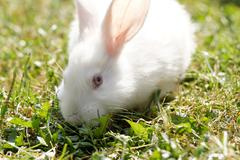 White bunny in green grass in the garden - stock photo