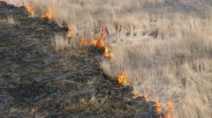 Burning old grass Stock Footage