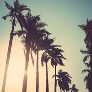 Coconut palm tree sunset vintage retro Stock Photos