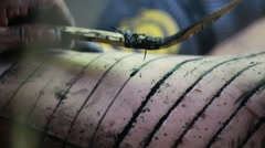 Close up of the making of a traditional Mentawai tattoo Stock Footage