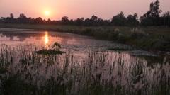 Sunset with pond,Lumbini,Nepal Stock Footage