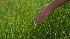 Girl in a field of grass hand Stock Footage