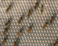 Ventilate the hive bees Stock Footage