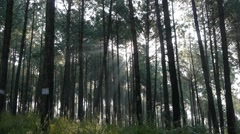 Rayes of the sun shine through the forest,Tansen,Nepal Stock Footage
