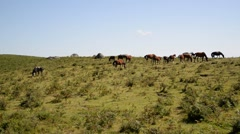 Horses grazing in the wild. - stock footage