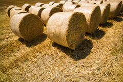 bales of straw and grain in a field - stock photo