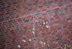 Sparrows In A Tree - stock photo