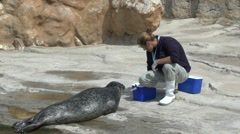 Sea lion being hand fed in L'Oceanogràfic, Valencia, Spain. Stock Footage