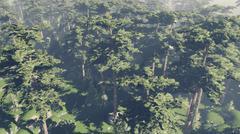 Flight over pinewood - stock photo
