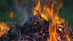 Fire in the forest Stock Footage