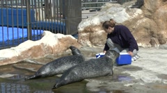 A pair of sea lions being hand fed in L'Oceanogràfic, Valencia, Spain. Stock Footage