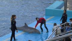 Children pet a beached dolphin during a show, L'Oceanogràfic, Valencia, Spain. Stock Footage