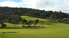 New Zealand Catlins shadow of cloud moves up pasture Stock Footage