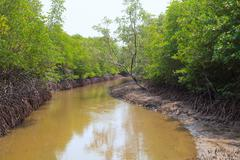 wet land ana tidal water area  of mangrove forest in pranburi national park s - stock photo