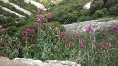 10s Silent Hummingbird Hawkmoth Montserrat Stock Footage