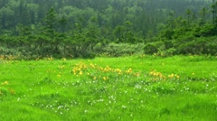 Flower field in Iwate Prefecture, Japan Stock Footage