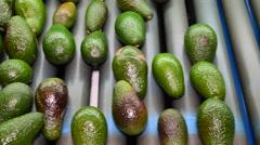 Avocado fruit rolling in linepack industry Stock Footage
