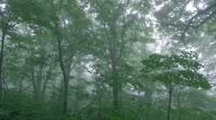 Forest in Aomori Prefecture, Japan Stock Footage