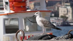 Seagull and rocking boat,Istanbul,Turkey Stock Footage